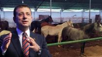 İBB'nin Hatay'a gönderdiği kayıp 100 atla ilgili kan donduran detaylar! Çiplerini çıkarmak için ameliyathane kurmuşlar...